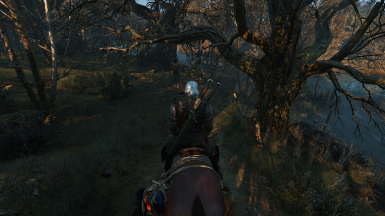 The Witcher 3 Screenshot 2017 10 21   23 28 58 65