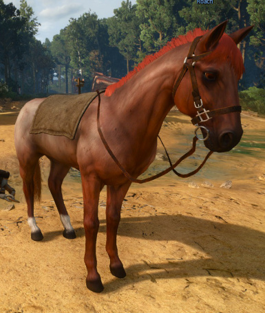 01 27red roan